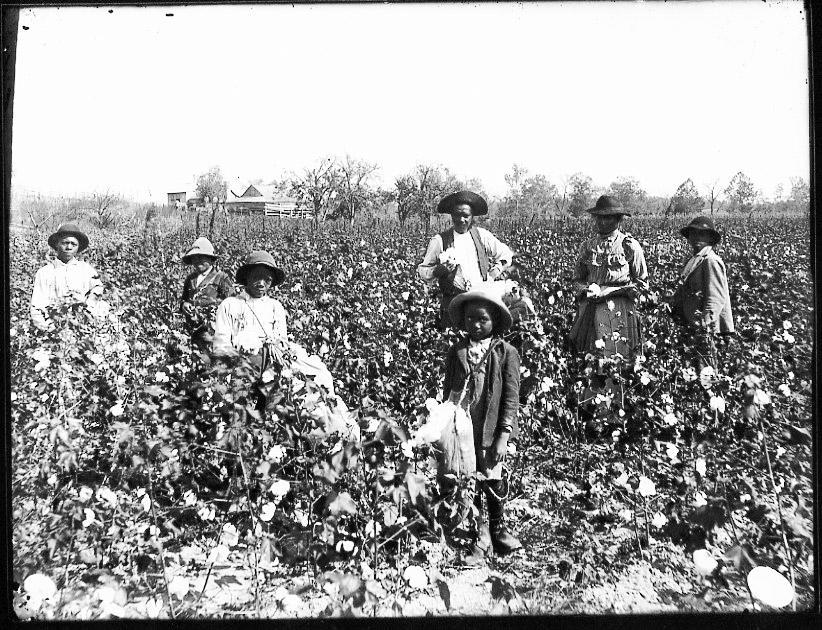 22bnew_1890s-black_cotton_farming_family