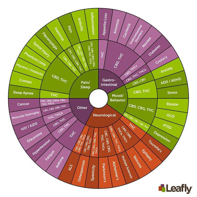 leafly-cannabinoid101